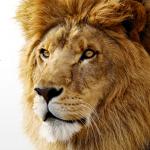 Mac OS X Lion - logo malé